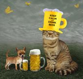Cat with dog and beer stock images