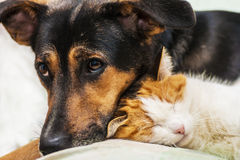 Cat and dog. Is best friends Stock Photography