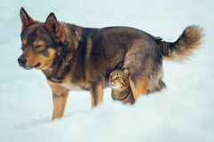 Cat and dog are best friends. Cat and dog best friends outdoors in the snow Royalty Free Stock Photo