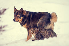Cat and dog are the best friends. Cat and dog best friends outdoors in the snow Stock Photo