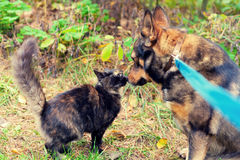 Cat and dog best friends. Dog and cat are best friends, playing together outdoor Royalty Free Stock Photography