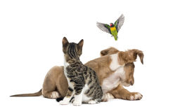 Cat, dog and bird, isloated on white. Isolated on white Stock Image