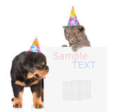 Cat and Dog in birthday hats peeking from behind empty board. is Stock Photos