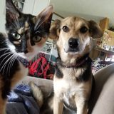 Cat and dog. Staring and sitting waiting royalty free stock image