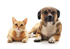 Cat and dog. Cat and dog on a white background Stock Photos