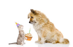 Cat and dog celebrate birthday. isolated on white background Stock Image