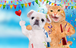 Cat and dog are celebrating. Royalty Free Stock Photo