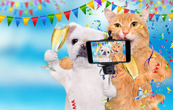 Cat and dog are celebrating with champagne glasses. Royalty Free Stock Photos