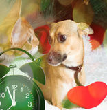 Cat, dog and Christmas Stock Images