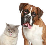 Cat and dog, close-up portrait Stock Photos