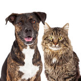 Cat and Dog Closeup Stock Photos