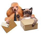 Cat and dog delivery post box. The white banner Stock Photos
