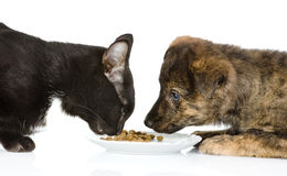 Cat and dog eating together. stock images