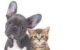 Cat and dog. Faces isolated royalty free stock photos