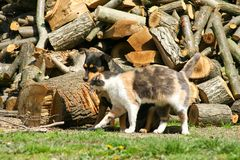 Cat and dog family. Outdoors photo stock photography