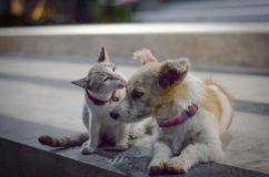 Cat and Dog family. Royalty Free Stock Photography