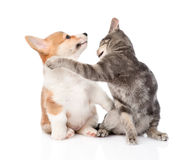 Cat and dog fight. isolated on white background Stock Images