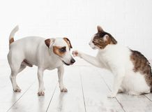 Cat and dog fighting. Pets at home Royalty Free Stock Photo