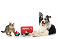 Cat and dog with first aid kit. Tabby kitten and adult border collie dog with first aid kit isolated on white background Stock Images