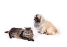 Cat and dog, friends. Two pets sitting on the floor stock photos