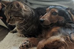 Cat and dog as friends stock photos