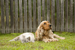 Cat and dog friendship Stock Photos