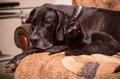 Cat dog friendship. Lovely black cat dog friendship Stock Photography