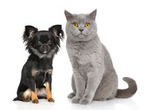 Cat and dog. In front of white background Royalty Free Stock Photography