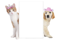Cat and dog with funny hats isolated Royalty Free Stock Photography