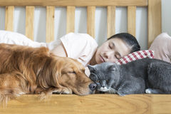 Cat and dog and girl sleeping Royalty Free Stock Images