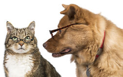 Cat and dog with glasses. Dog is looking at the cat Royalty Free Stock Photos