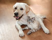 Cat and dog are great friends. A cat and a dog jostle and love each other, cute hugslie on the wooden dark floor Stock Photos