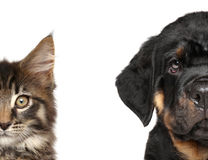 Cat and dog, half of muzzle Stock Photo