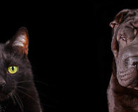 Cat and Dog - half of muzzle close up portraits Stock Photography