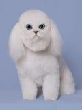 Cat Dog Royalty Free Stock Photos