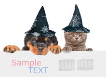 Cat and Dog with hats for halloween peeking from behind empty board. isolated on white background. Cat and Dog with hats for halloween peeking from behind empty Royalty Free Stock Photography