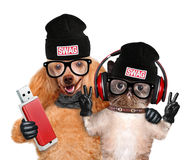 Cat and dog headphones. Royalty Free Stock Photography
