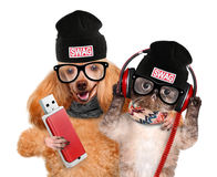 Cat and dog headphones. Isolated on white Stock Photos