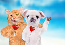 Cat and dog holding in paws sweet tasty lollipop in the shape of heart. Royalty Free Stock Photography