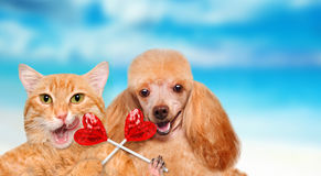 Cat and dog holding in paws sweet tasty lollipop in the shape of heart. Royalty Free Stock Image