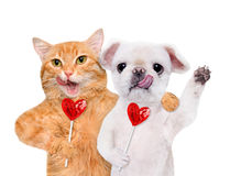 Cat and dog holding in paws sweet tasty lollipop in the shape of heart. Stock Images