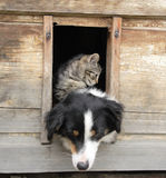 Cat and dog at home. Small cat and big dog and their nice wooden home Stock Images