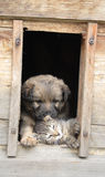 Cat and dog at home Stock Photography