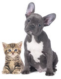 Cat and dog. Isolated on white Royalty Free Stock Photography