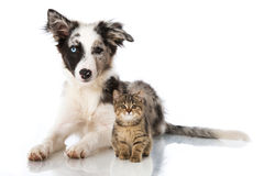 Cat and dog. Isolated on white Royalty Free Stock Images