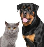 Cat and dog isolated on white background Stock Image