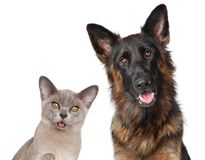 Cat and dog isolated on white background Royalty Free Stock Image