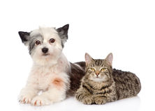 Cat and dog lie nearby. isolated on white background Stock Photo