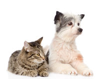 Cat and dog lie nearby. isolated on white background Royalty Free Stock Photography