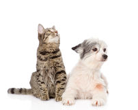 Cat and dog lie nearby. isolated on white background Royalty Free Stock Images